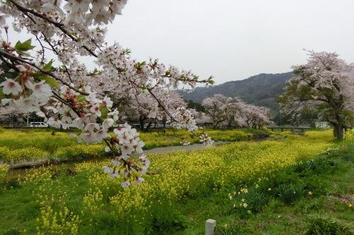 琵琶湖サイクリング_b0332867_21461881.jpg