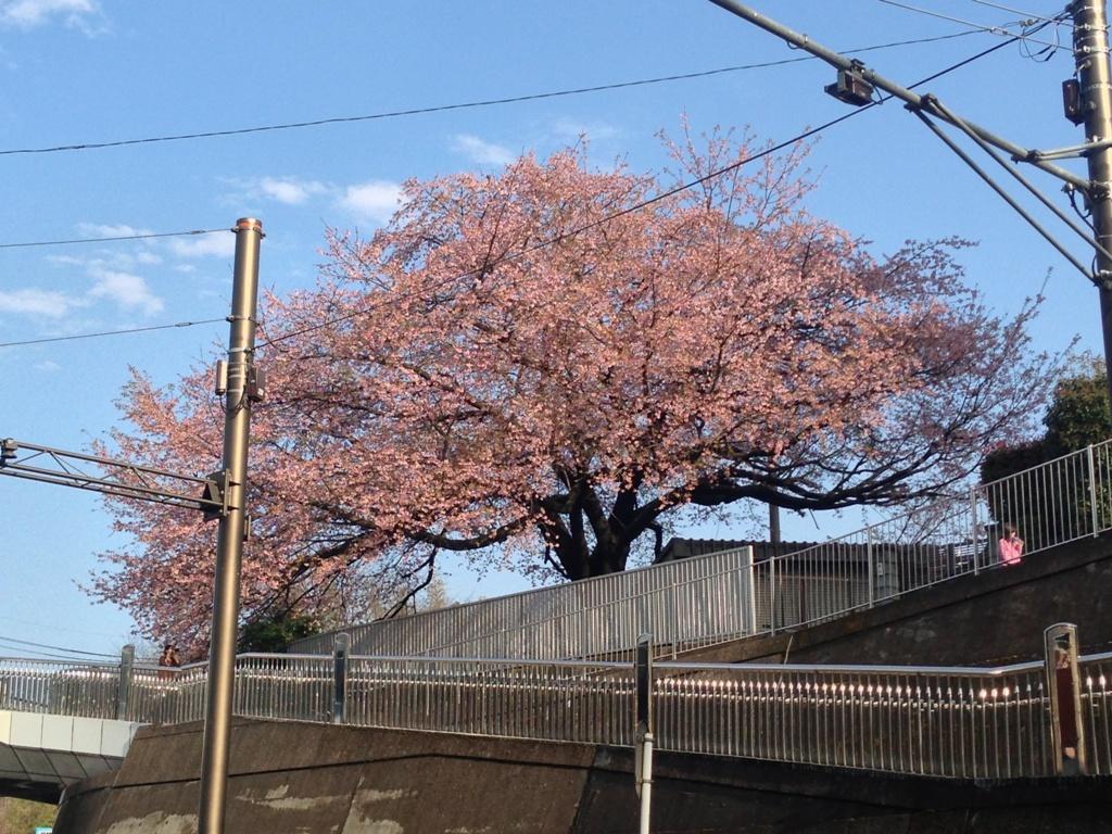 春の花_c0310571_08135567.jpg