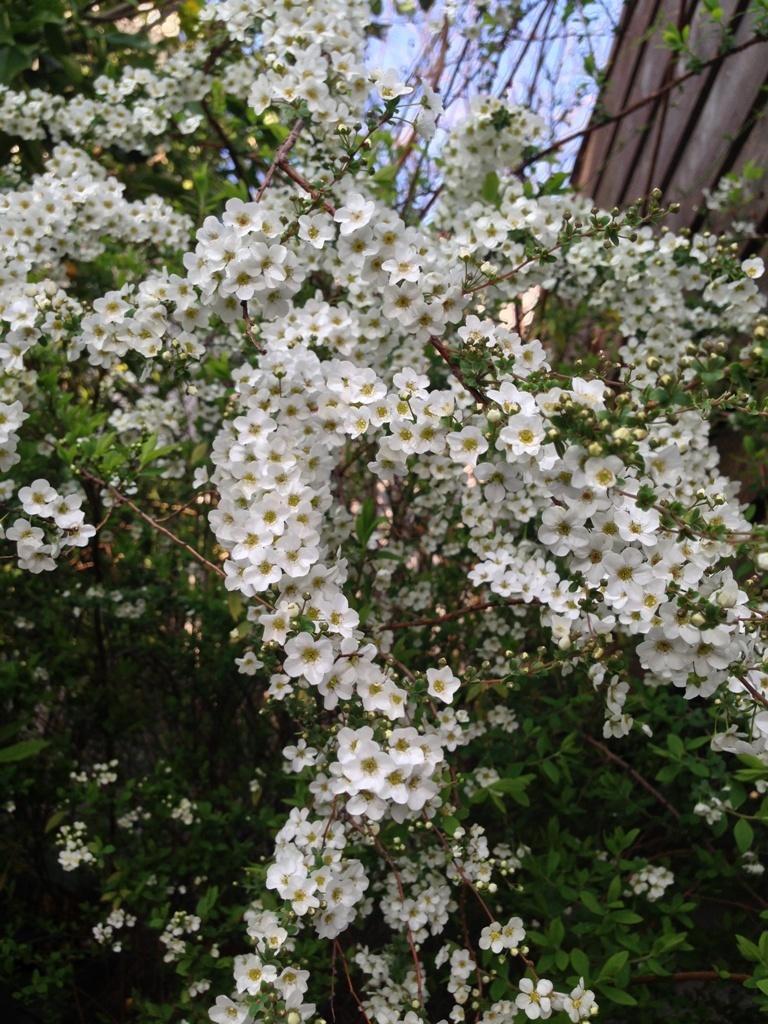 春の花_c0310571_08140697.jpg
