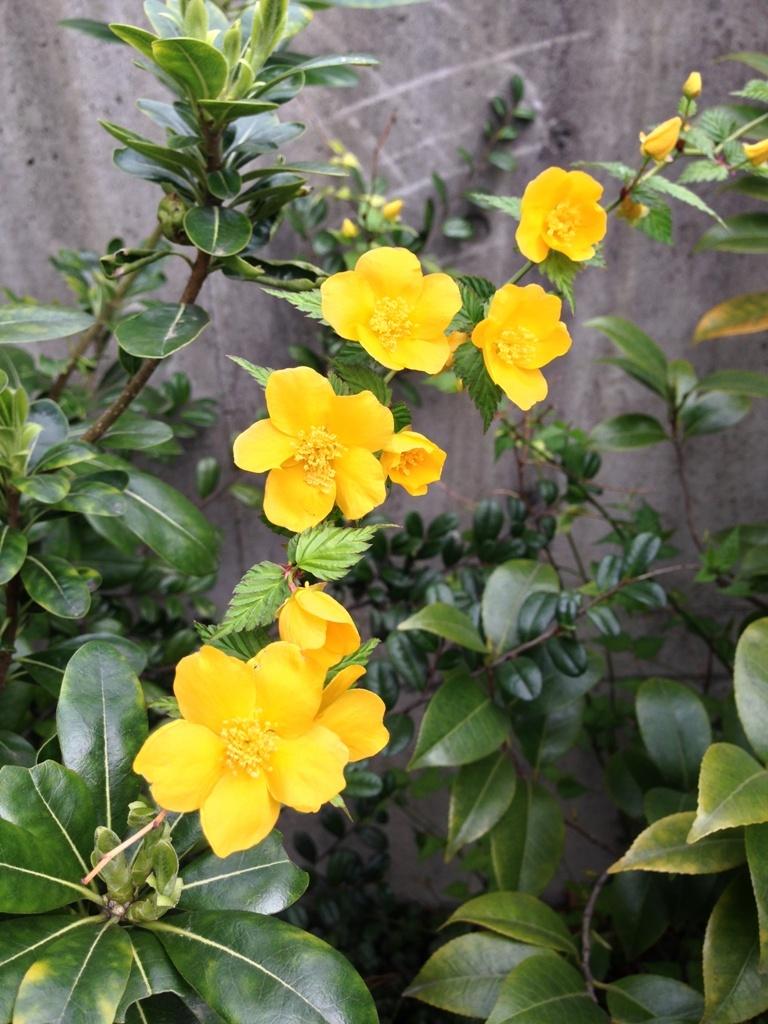 春の花_c0310571_08143695.jpg