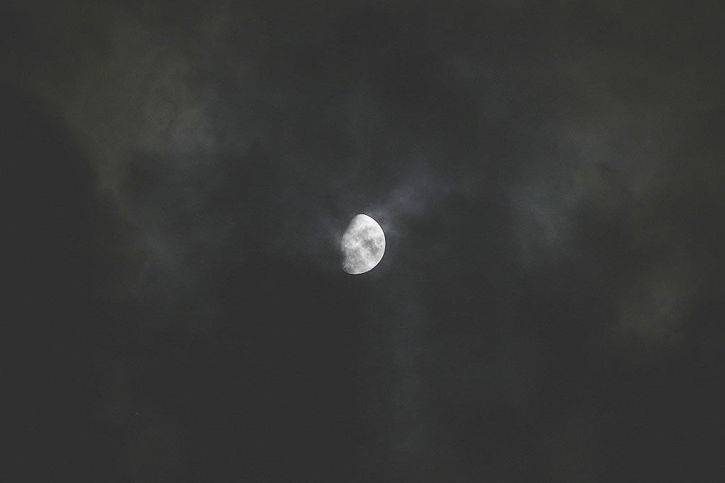 ヤマブキ/アリスイ/モズの給餌/肉眼黒点/月面_b0024798_15154770.jpg