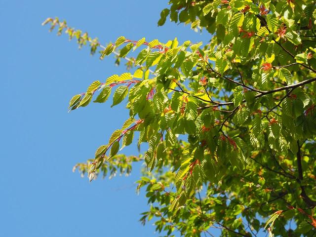 植物たちの癒しの力が届きますように_e0232798_21235942.jpg