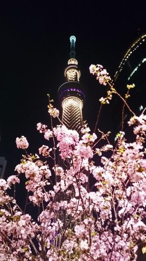 東京スカイツリーと遅咲き桜のコラボ_b0083801_09283083.jpg