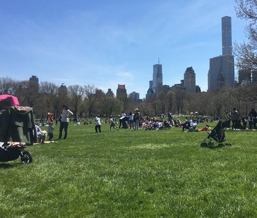 ほのぼのムードの春のセントラルパーク、広大な芝生広場のシープメドーの様子_b0007805_2112183.jpg
