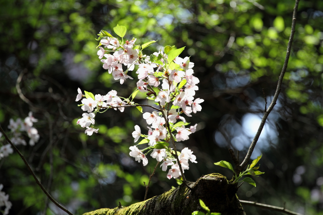 花と新緑が同居する季節_b0190710_23262632.jpg