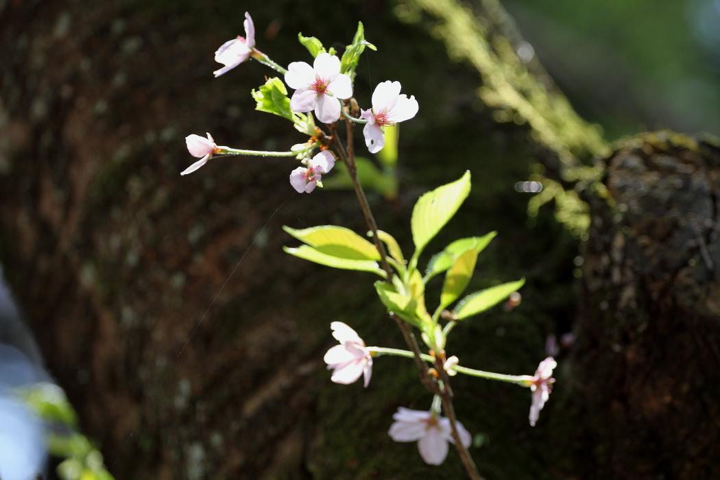 花と新緑が同居する季節_b0190710_2326568.jpg