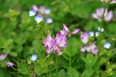 菜園の花と山菜_e0048413_21373630.jpg