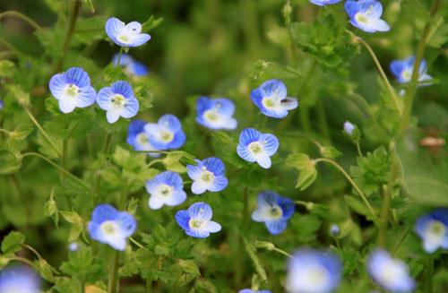 菜園の花と山菜_e0048413_21375273.jpg