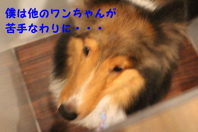 b0130018_2030987.jpg