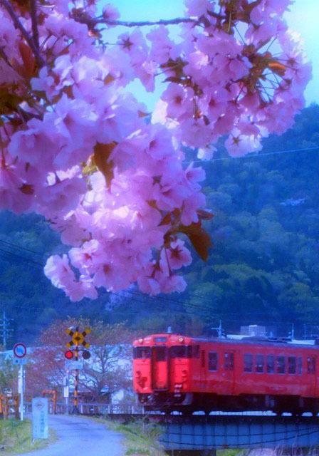 sakura de asobi_d0295818_16401198.jpg