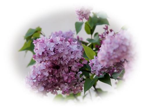 週末の草取りと庭の花_c0026824_15574198.jpg