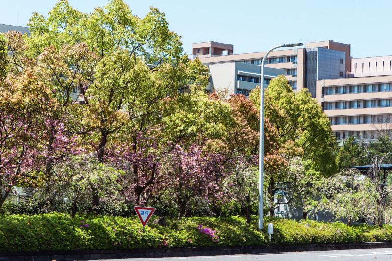 セシール 志度ロジスティクスセンターの桜 ②_d0246136_18272528.jpg