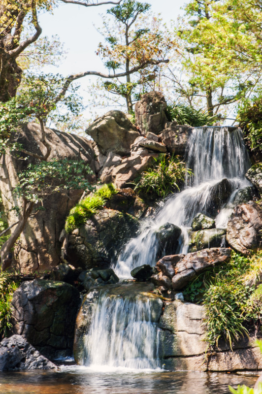 セシール 志度ロジスティクスセンターの桜 ②_d0246136_18294540.jpg