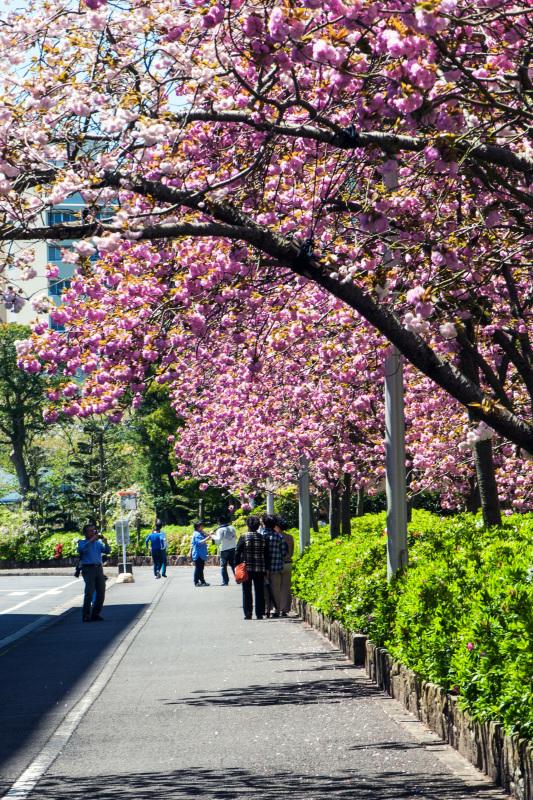 セシール 志度ロジスティクスセンターの桜 ②_d0246136_18304197.jpg