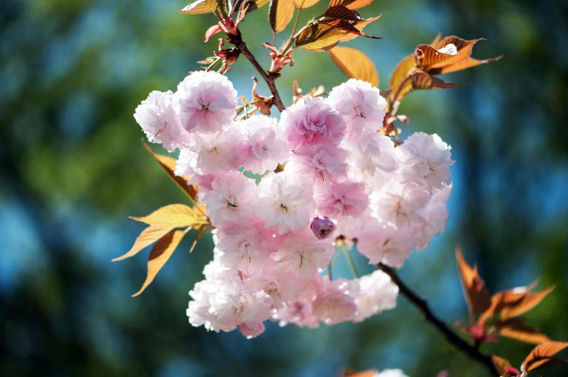 セシール 志度ロジスティクスセンターの桜 ②_d0246136_18320552.jpg
