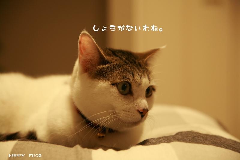 f0032042_1648421.jpg
