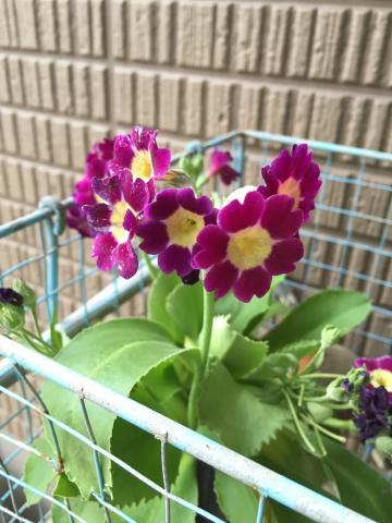 4/18の庭_a0223650_06593392.jpg