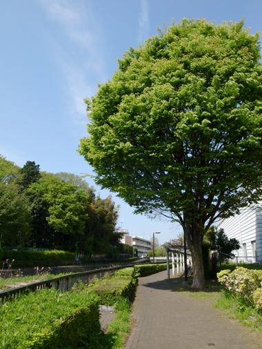 葉脈、脈々、木漏れ陽の季節へ_e0071652_11551812.jpg