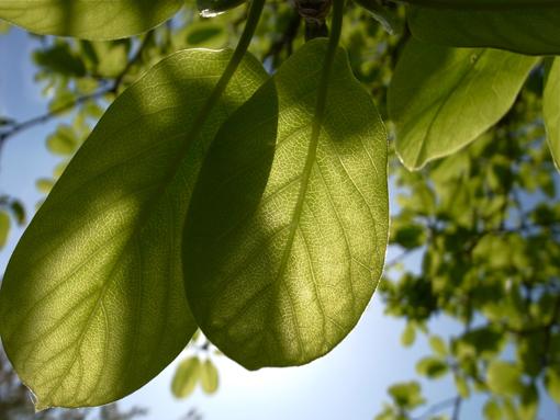葉脈、脈々、木漏れ陽の季節へ_e0071652_1155789.jpg