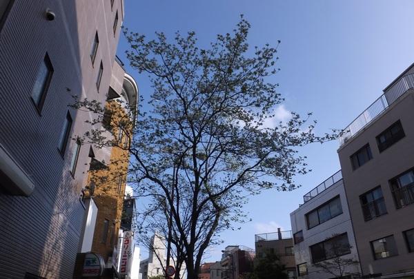 九洲_a0248481_2050815.jpg