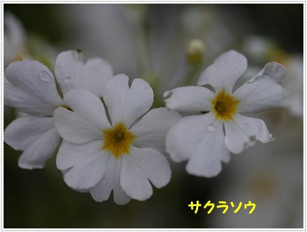 b0175688_15442209.jpg