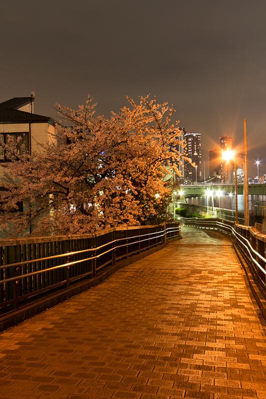 Hello from Tokyo 44 佃島_a0003650_2253149.jpg