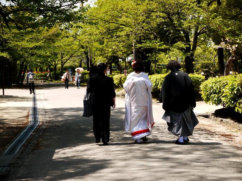 和歌山城のボタン園_b0093754_20221598.jpg