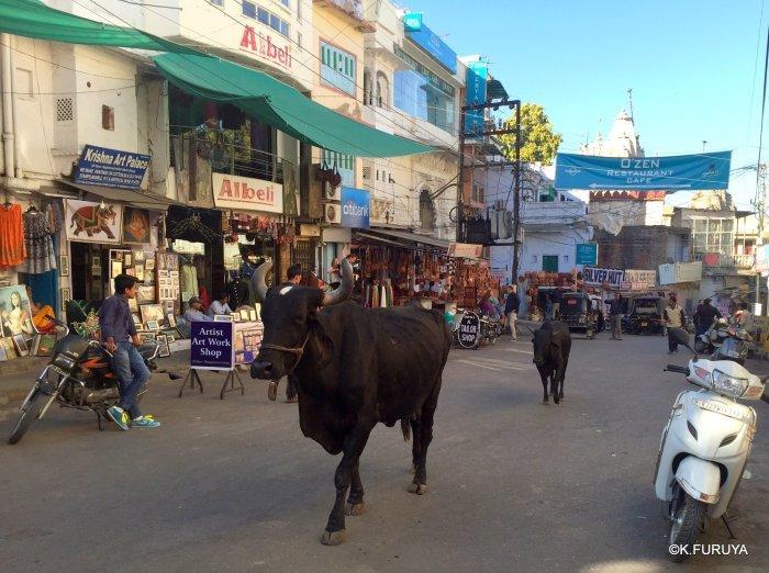 インド・ラジャスタンの旅 16 ウダイプールひとり歩き_a0092659_19581624.jpg