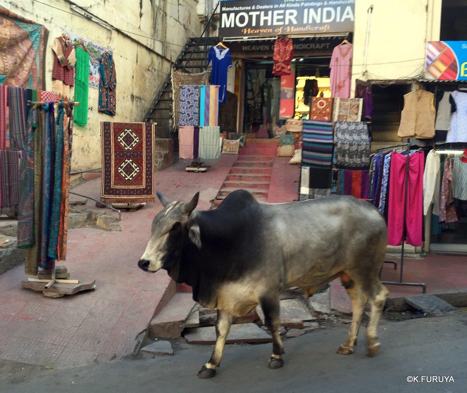 インド・ラジャスタンの旅 16 ウダイプールひとり歩き_a0092659_20005786.jpg