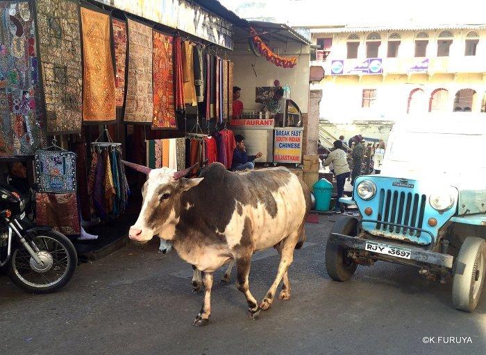 インド・ラジャスタンの旅 16 ウダイプールひとり歩き_a0092659_20040360.jpg
