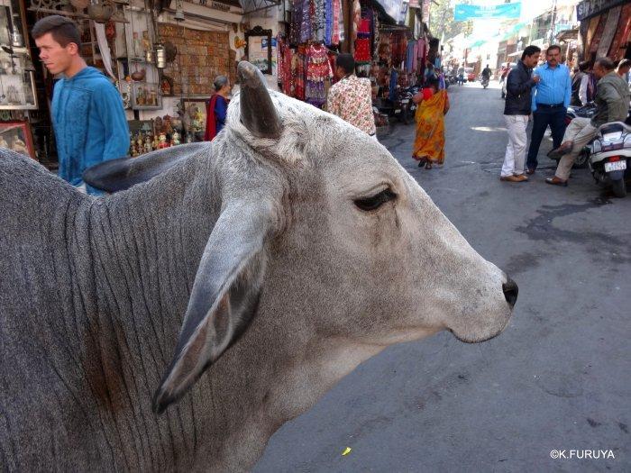 インド・ラジャスタンの旅 16 ウダイプールひとり歩き_a0092659_20185956.jpg