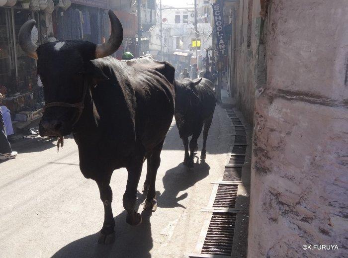 インド・ラジャスタンの旅 16 ウダイプールひとり歩き_a0092659_20205910.jpg