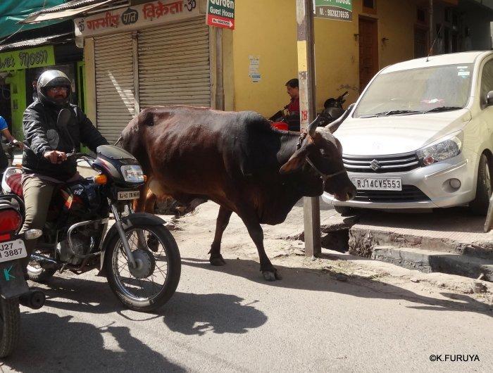 インド・ラジャスタンの旅 16 ウダイプールひとり歩き_a0092659_23063939.jpg