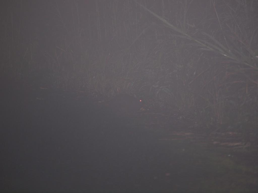 4/18 雨の森_a0010095_1375135.jpg