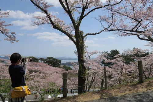 桜三昧_f0138096_22365311.jpg