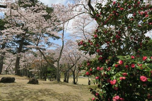 桜三昧_f0138096_22371310.jpg