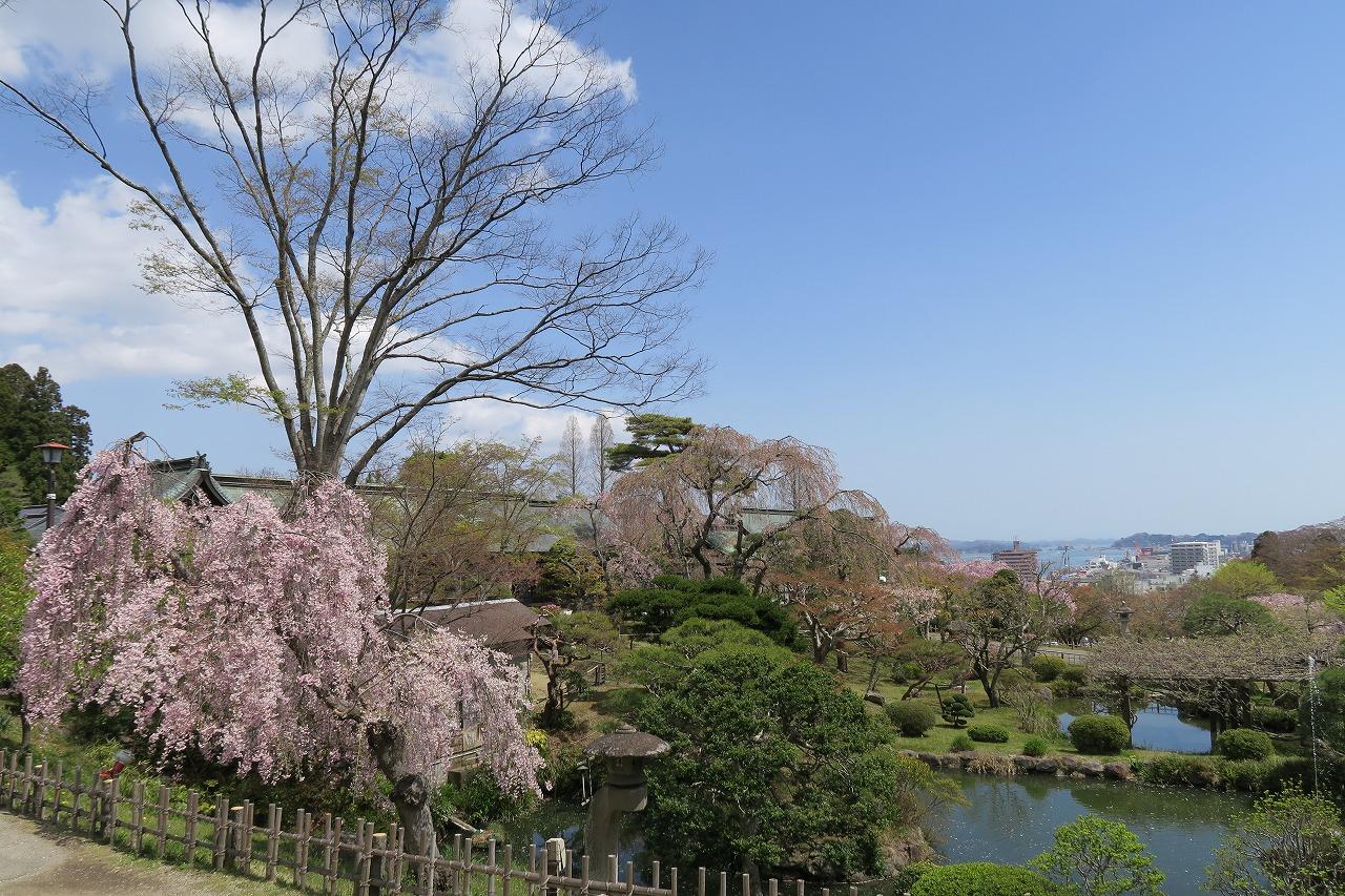 桜三昧_f0138096_22373789.jpg