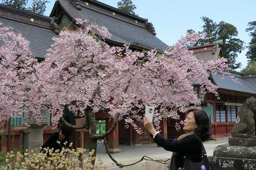 桜三昧_f0138096_2238387.jpg