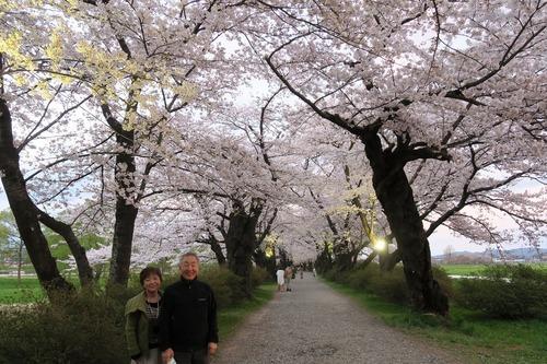 桜三昧_f0138096_22405098.jpg