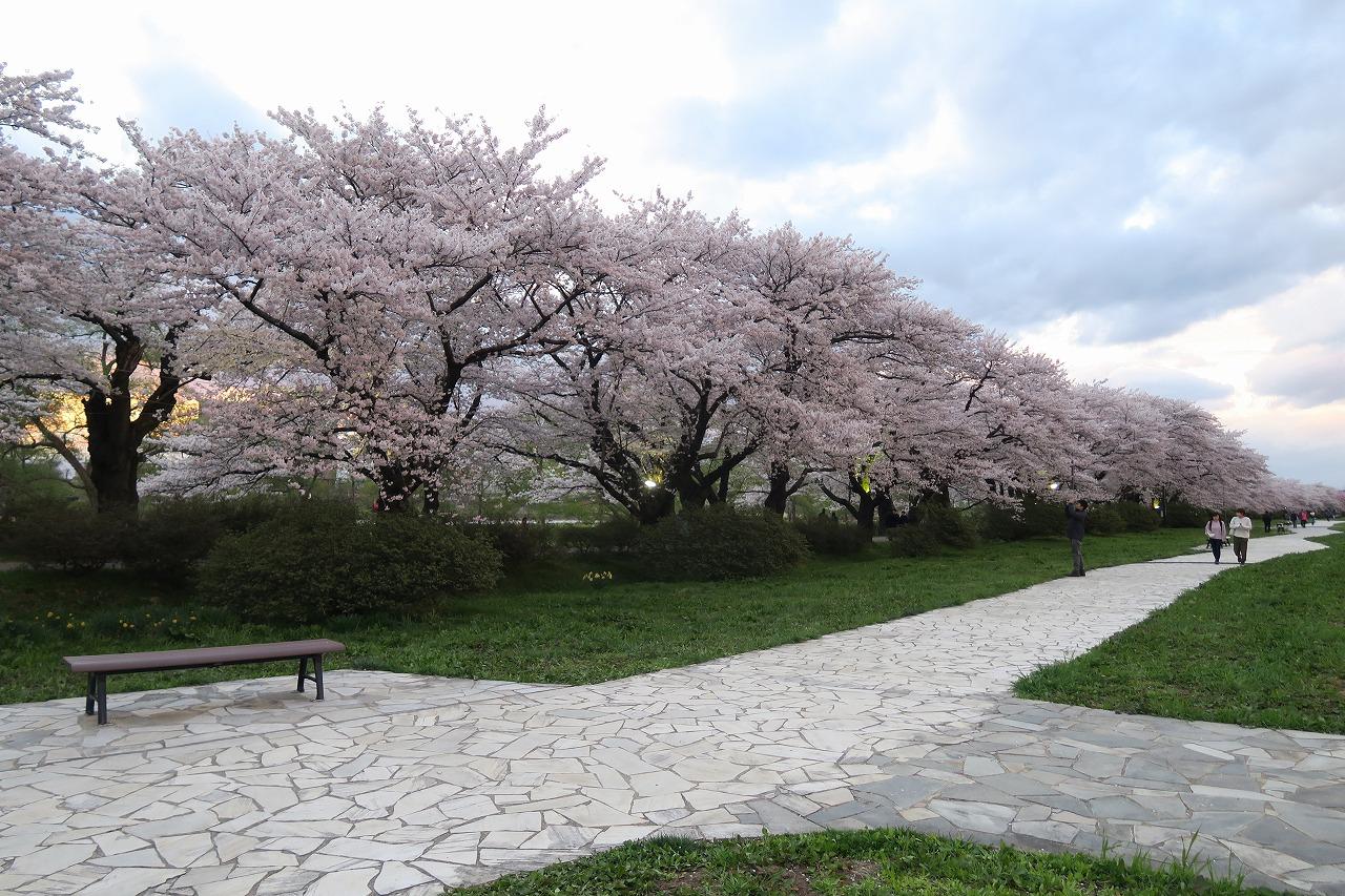 桜三昧_f0138096_2240934.jpg