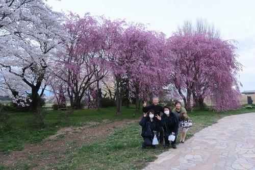 桜三昧_f0138096_22411739.jpg