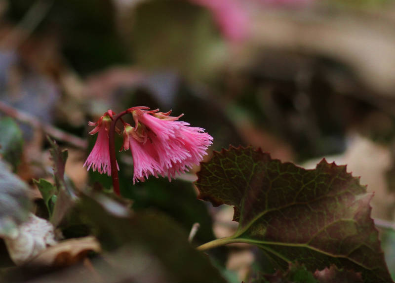 季節の花 2016 4月ー4_b0223198_22265075.jpg