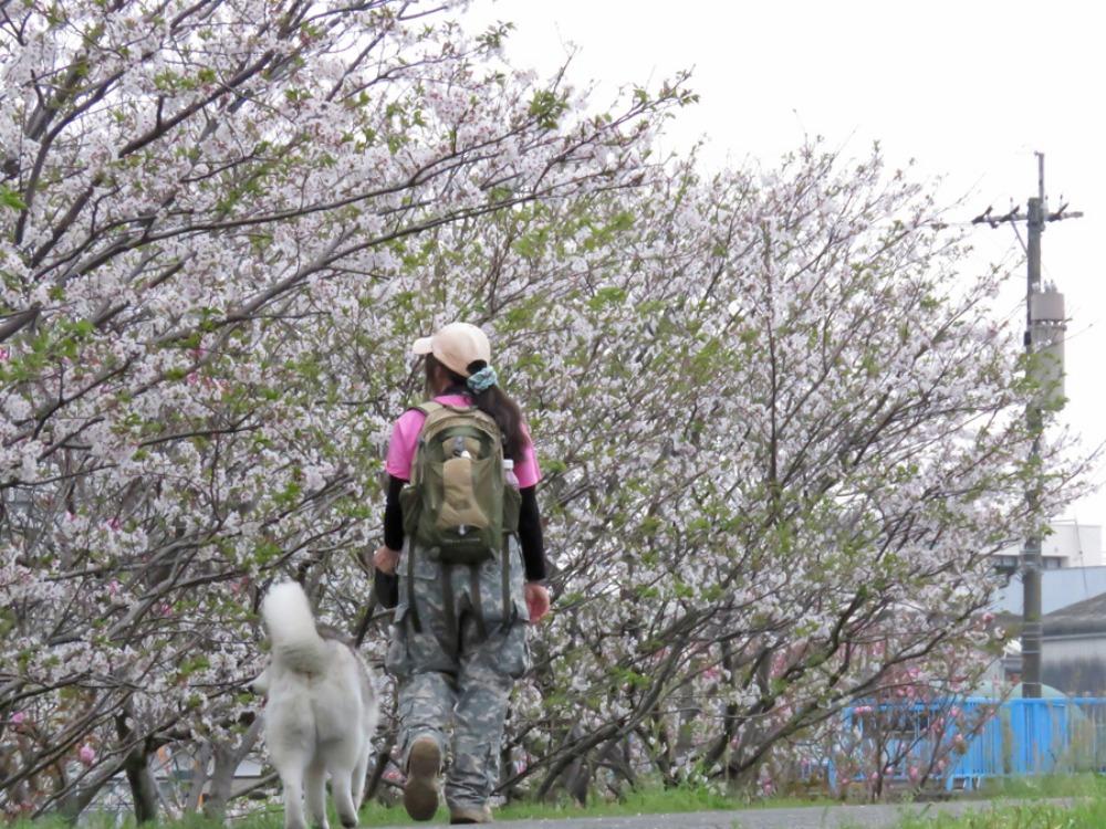 まだ桜が・・・ (*^_^*)_c0049299_213023.jpg