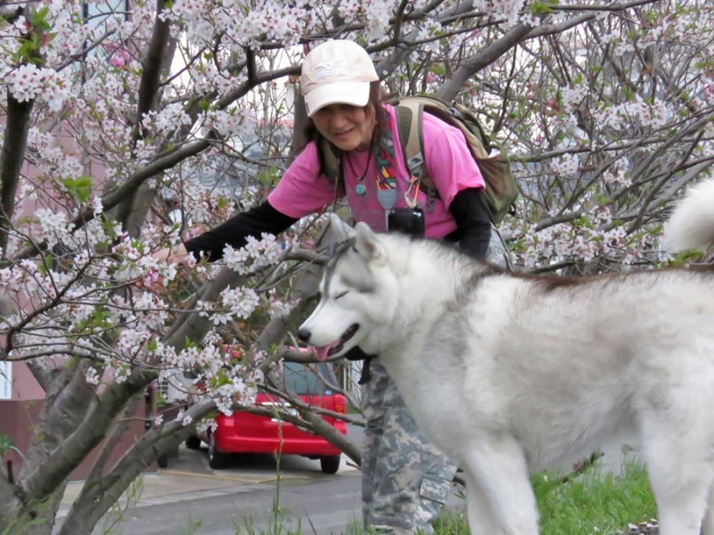 まだ桜が・・・ (*^_^*)_c0049299_2130597.jpg