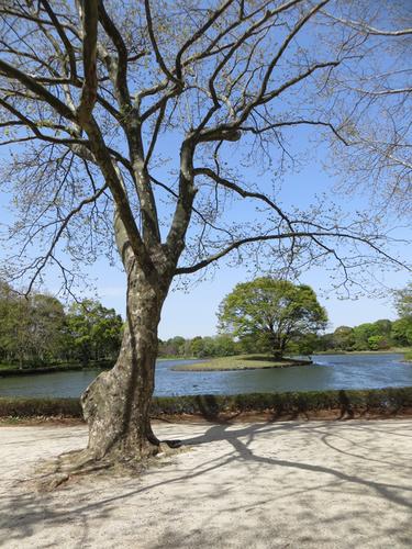 来月は昭和記念公園で。_b0129807_22511754.jpg