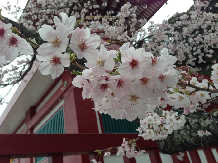 桜の記憶_f0226714_5271941.jpg