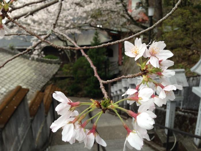 桜の記憶_f0226714_534225.jpg