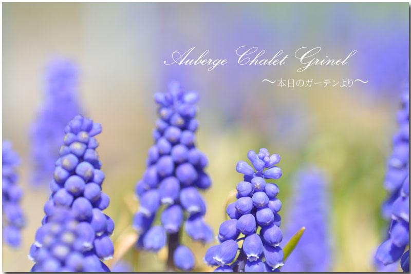 春の訪れ   _d0109415_14434366.jpg