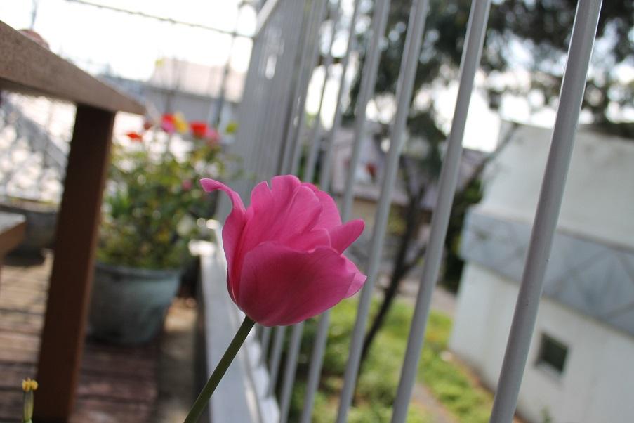 蘭香茶館の春,2016_f0070743_949462.jpg