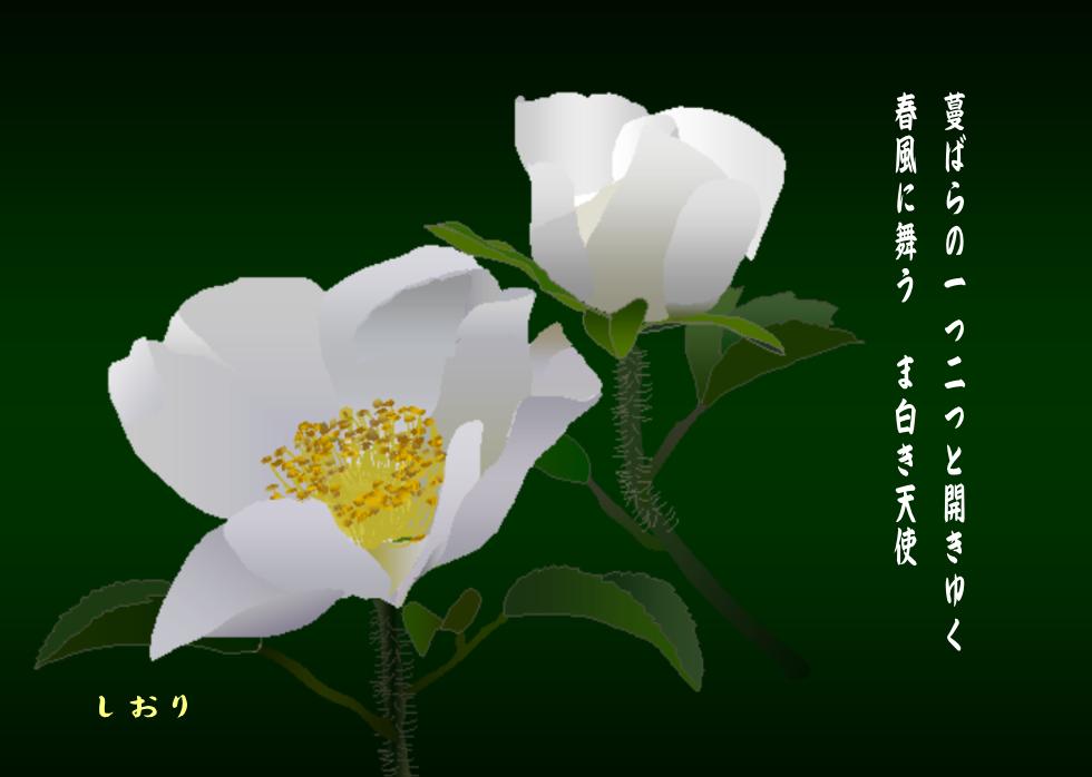 白い蔓ばら(ナニワイバラ)_c0187781_21390086.png